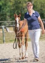 Foal 33 HDP Régional 2020-320809