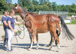 Foal 33 HDP Régional 2020-330813