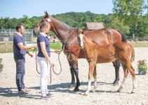 Foal 33 HDP Régional 2020-330816