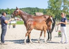 Foal 33 HDP Régional 2020-330823