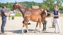 Foal 33 HDP Régional 2020-330824