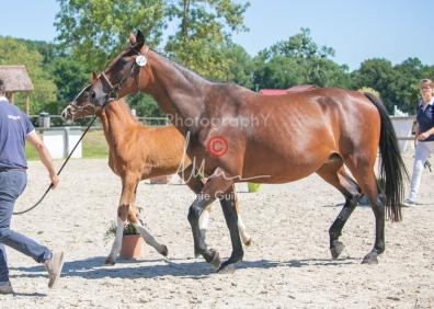 Foal 33 HDP Régional 2020-330854
