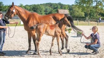 Foal 8 HDP régional 2020-089617
