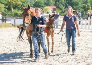 Foal 8 HDP régional 2020-129610