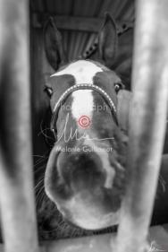 Foal Kalm Vertige d'Altaic-9695