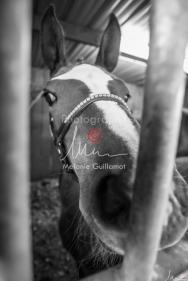 Foal Kalm Vertige d'Altaic-9696