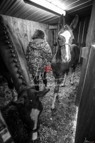 Foal Kalm Vertige d'Altaic-9697
