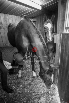 Foal Kalm Vertige d'Altaic-9700