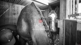 Foal Kalm Vertige d'Altaic-9701