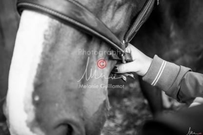 Foal Kalm Vertige d'Altaic-9715