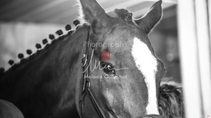 Foal Kalm Vertige d'Altaic-9716