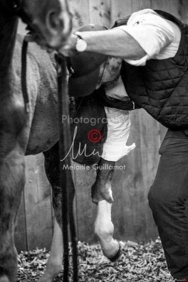 Foal Kalm Vertige d'Altaic-9726