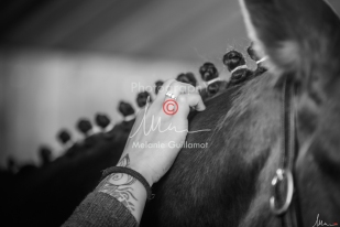 Foal Kalm Vertige d'Altaic-9731