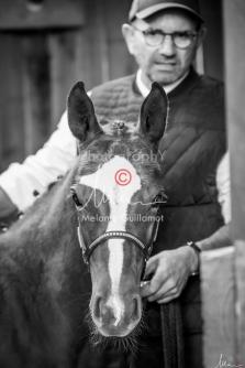 Foal Kalm Vertige d'Altaic-9735