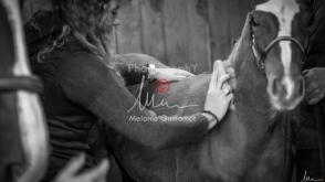 Foal Kalm Vertige d'Altaic-9739