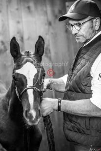 Foal Kalm Vertige d'Altaic-9743