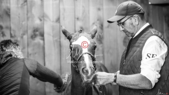Foal Kalm Vertige d'Altaic-9747