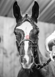 Foal Kalm Vertige d'Altaic-9752