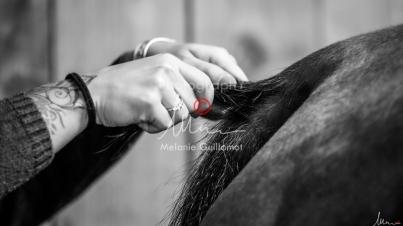 Foal Kalm Vertige d'Altaic-9756