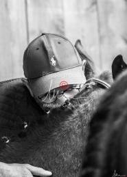 Foal Kalm Vertige d'Altaic-9768