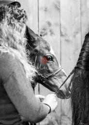 Foal Kalm Vertige d'Altaic-9771