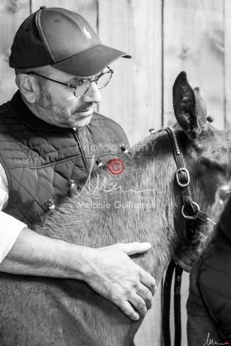 Foal Kalm Vertige d'Altaic-9775