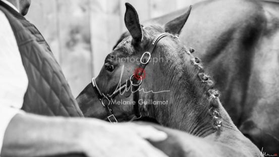 Foal Kalm Vertige d'Altaic-9776
