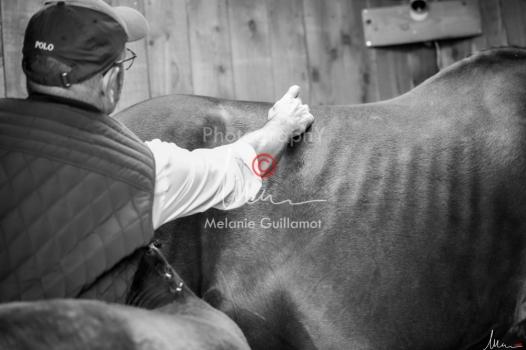 Foal Kalm Vertige d'Altaic-9780