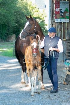 Foal Kalm Vertige d'Altaic-9784