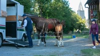Foal Kalm Vertige d'Altaic-9788
