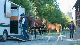 Foal Kalm Vertige d'Altaic-9791