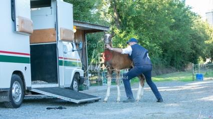 Foal Kalm Vertige d'Altaic-9804