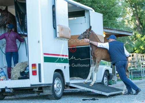 Foal Kalm Vertige d'Altaic-9806