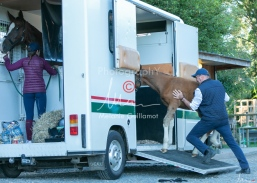 Foal Kalm Vertige d'Altaic-9807